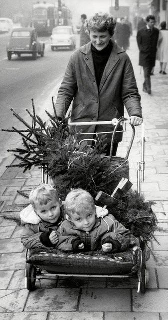 Taking Home the Christmas Tree, 1950's