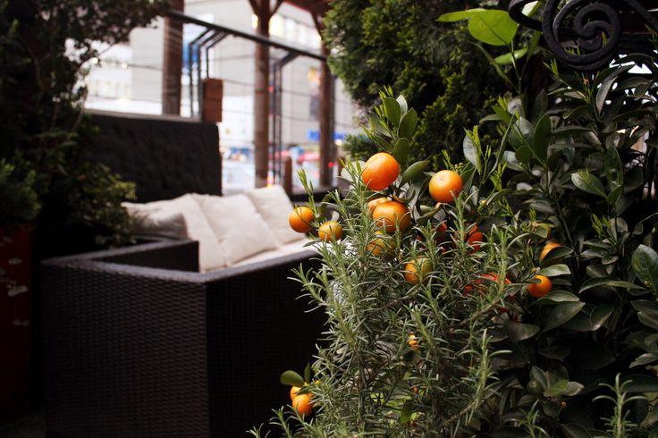 Mandarinas en la terraza de #SuTerceraCasa #Bogotá #Mandarinas #Frutas #Fotografia