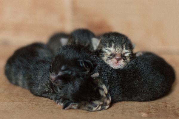When Do Kittens Open Their Eyes Sleeping Kitten Kitten Eyes Newborn Kittens