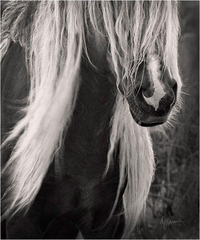 a beautiful wild horse on Sable Island National Park Reserve of Canada (Atlantic coast)