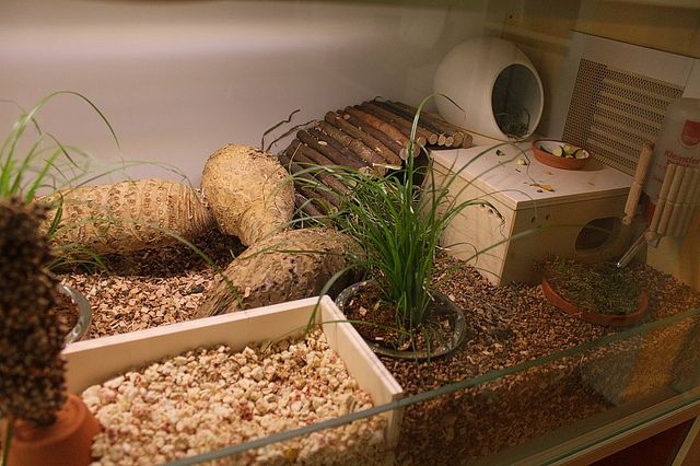 I got a lot of my ideas from this German hamsterforum http://www.das-hamsterforum.de/ and also by looking at the terrariums of reptiles.  The cork granules are from the reptile/terra section in the pet shop - they are normally used in tortoise terras. The beech chips were supposed to be for bird cages - the bird section of the pet shop is also a good idea to look for natural treats, eg. millet, flax, rice risps, dari etc.   The houses are built from an IKEA Fira set.