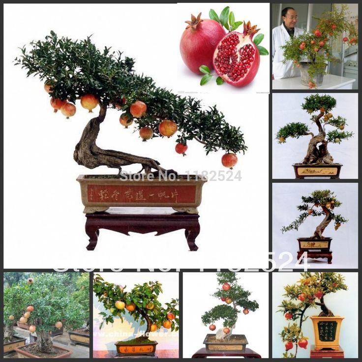 Бесплатная доставка 50 шт./лот Punica граната - сладкий органическая гранатовое дерево бонсай семена
