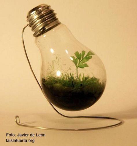 Cómo hacer un jardín miniatura en una bombilla | Cuidar de tus plantas es facilisimo.com