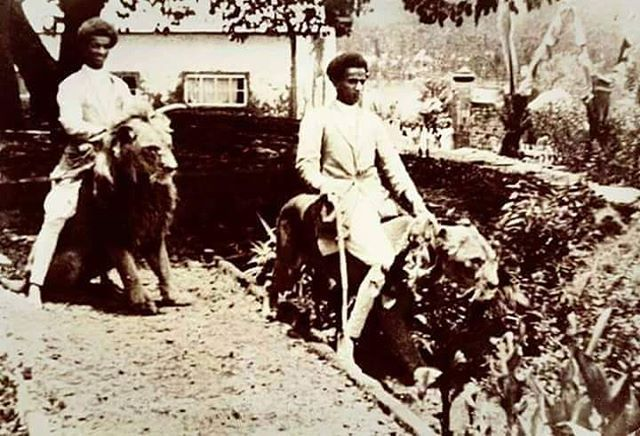 Ethiopians riding [Lions] in the 1930s. During the rein of ...