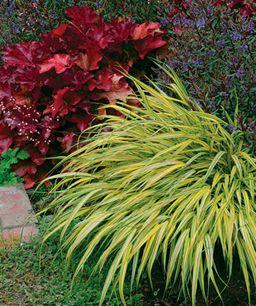 Thin or needlelike foliage: The elongated shape of plants, like 'Aureola' Japanese forest grass (Hakonechloa macra 'Aureola', Zones 5–9) and 'Caledonia' hebe (Hebe 'Caledonia', Zones 8–10), gives the landscape a billowy appearance.