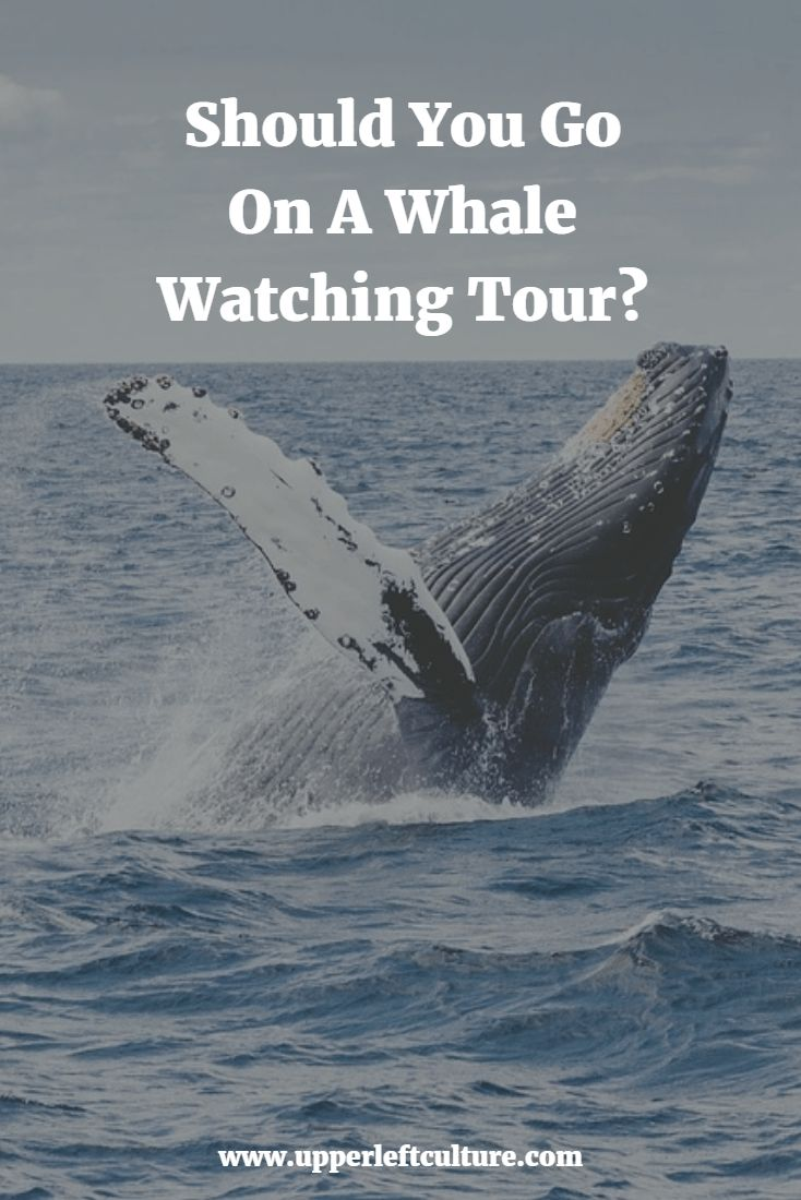"""Why Go Whale Watching – Why See Whales in Their Natural Habitat? """"There's nothing that compares to seeing these animals in the wild."""" – Erin, a naturalist with Island Adventures speaking about whale watching orcas in the San Juan Islands. Imagine yourself onboard the Island Explorer 4, a vessel designed for the optimal whale watching experience cruising through the … Continue reading """"Should You Go On A Whale Watching Tour?"""""""