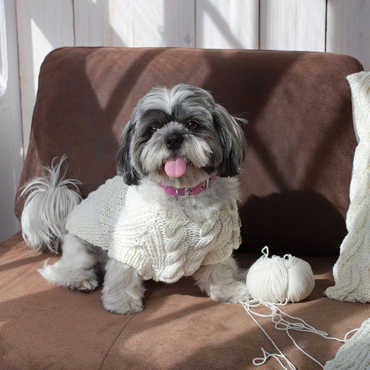 Un pull pour chien tricoté en torsades
