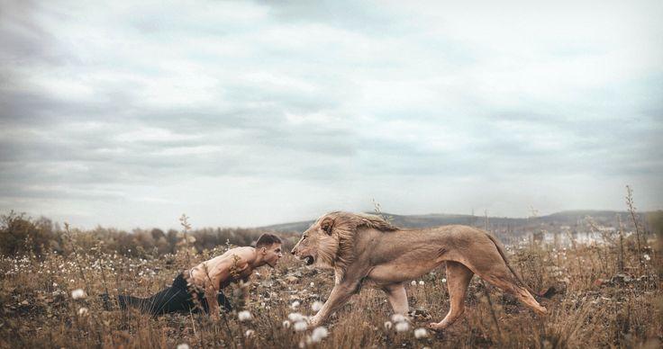 man vs lion 4k ultra hd wallpaper