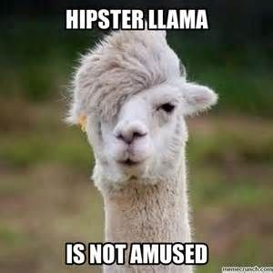 Image result for llamas