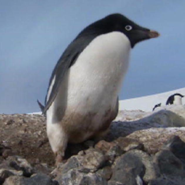 Top 10 Penguin Videos