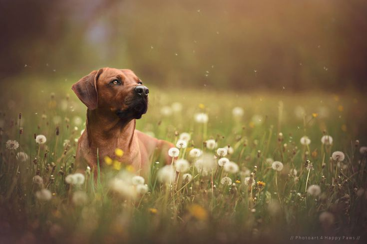 Anne Geier maakt in haar vrije tijd prachtige foto's van deze honden. En daar kiest ze betoverend mooie locaties voor uit.