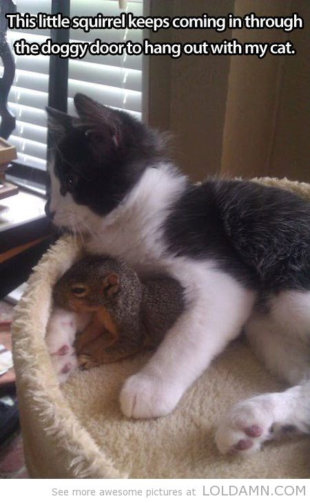 Cat and squirrel. Love. So cute.