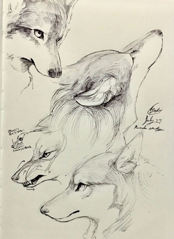 She wolf drawing