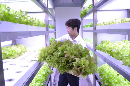 Urban agriculture: The new face of cityscapes