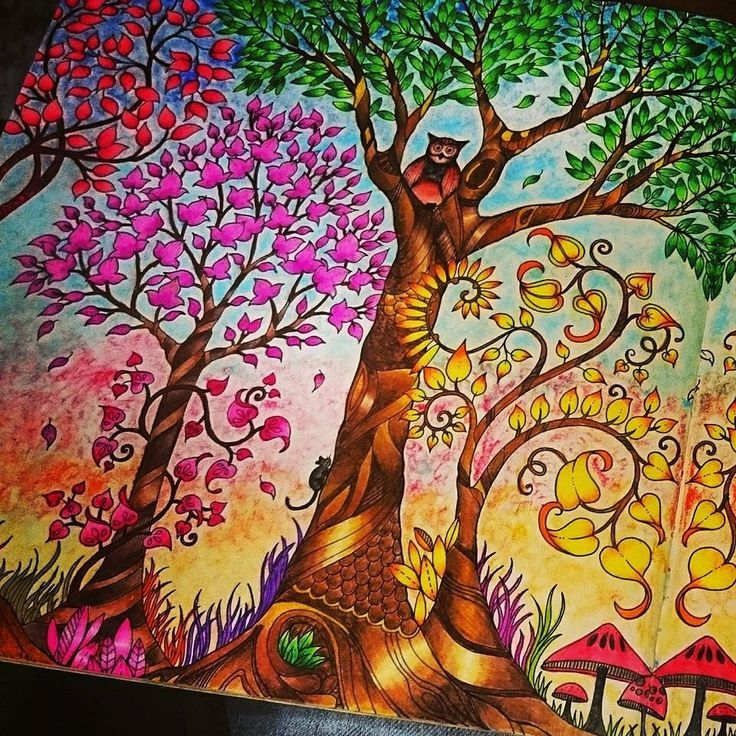 Trees Owl Enchanted Forest Arvores Coruja Floresta Encantada Johanna Basford Coloring BookEnchanted