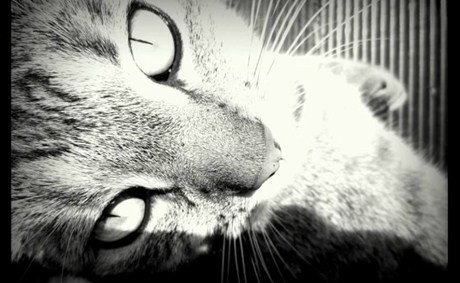 Recycle your phone are receive six of your favourite digital images free - it's the #memorymuster #cat