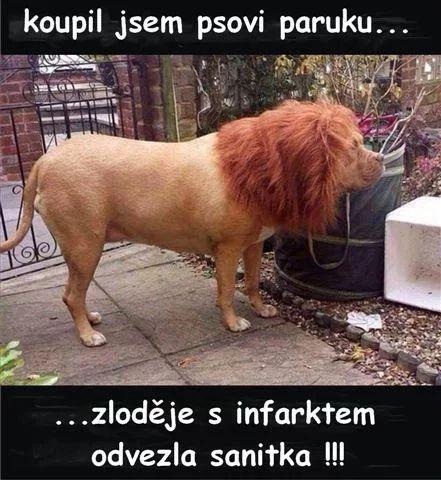 Kúpil som psovi parochňu... ...zlodeja s infarktom odviezla sanitka!!! :)))