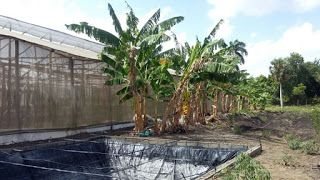 Aquiles Rojas - Real Estate Advisor: Finca con Invernadero en Venta - 29112 - RD$4,000,...
