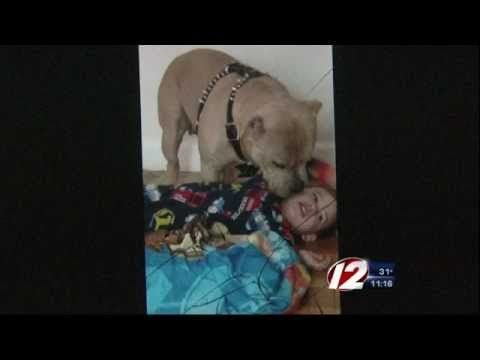"""Family Pit Bull attacks 2 yr old boys face - """"he played with it all the ..."""