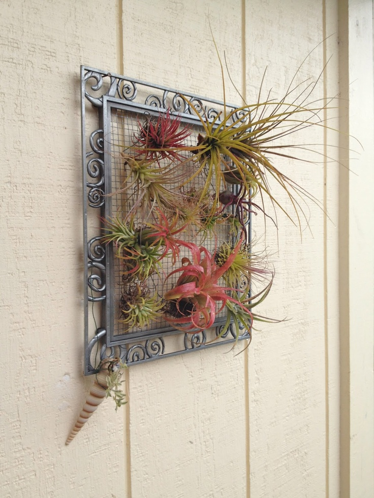 Living picture of air plants.