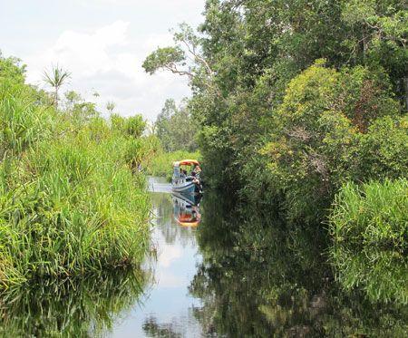 Tanjung Puting, Camp Leakey River. Tour By Klotok Seeing the Orangutan