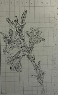 study of a lilyleonardo i had to reproduce a drawing