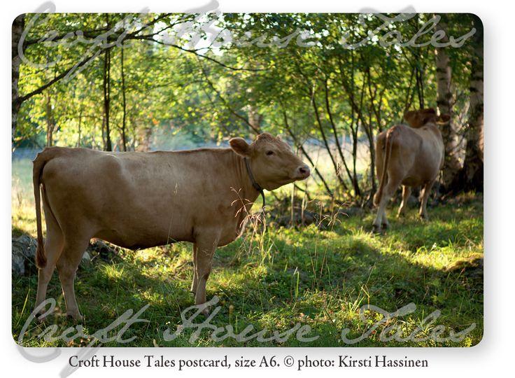 www.paperisilppuri.fi Croft House Tales postcard - Cattle