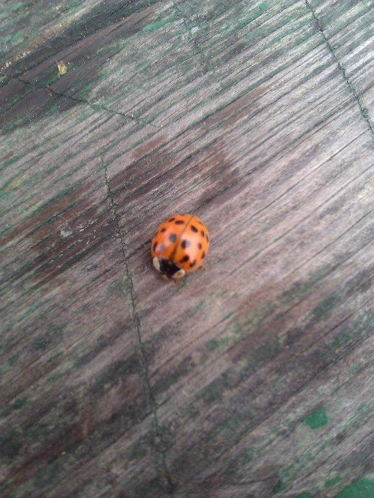 Just a small wonder of mother nature...#LadyBug#