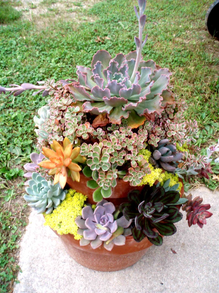 Stacked pots make a great home for succulents!  Stop by Old Time Pottery for some great pots and planters!  http://www.oldtimepottery.com/