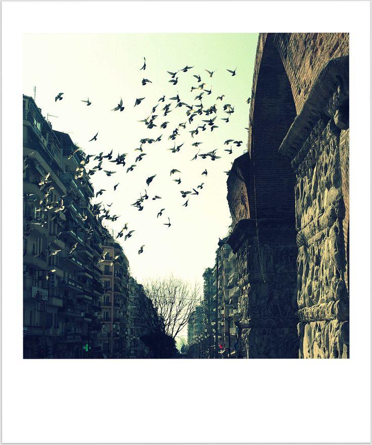 birds bridging centuries