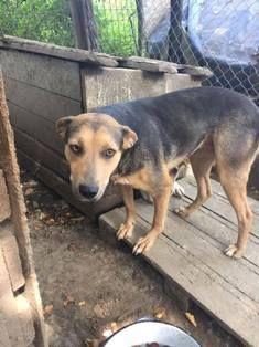 Tiere In Not Seite Hunde Aus Rumanien Hunde Aus Rumanien Hunde In Not Tiere In Not