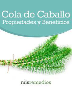 #Cola de caballo - Propiedades y Beneficios #PlantasMedicinales