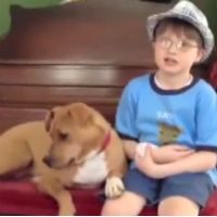 Severely Abused Dog and Autistic Boy Are a Match Made in Heaven - Heartwarming Video