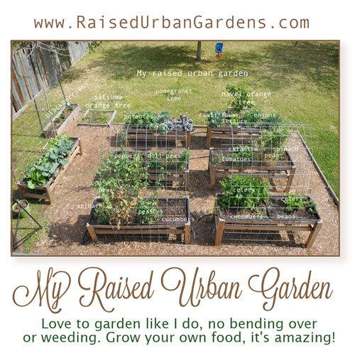A bird's eye view of my garden. Blog with pictures, plans and how to garden. Grow your own food, it's amazing!
