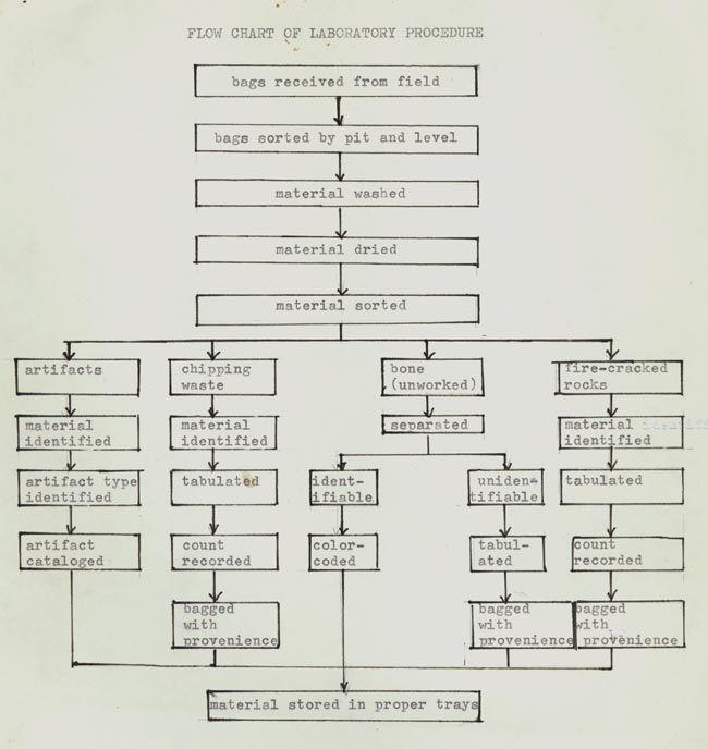 dichotomous key template - dichotomous flow chart related keywords dichotomous flow