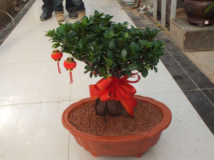 Chinese bonsai fertilizer clay soil