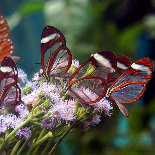 9 Must See Exotic Costa Rica Animals Beautiful ButterfliesBeautiful