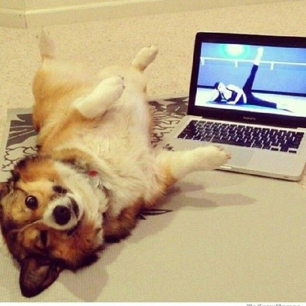 10 Facts About Corgis You Paw-bibly Didn't Know