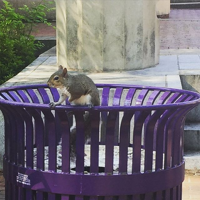 Always excited to get a visit from the #ecusquirrels