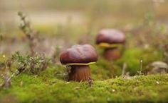 НАША СТРАНА МАСТЕРОВ: Лесные грибочки своими руками! Поделки вместе с де...