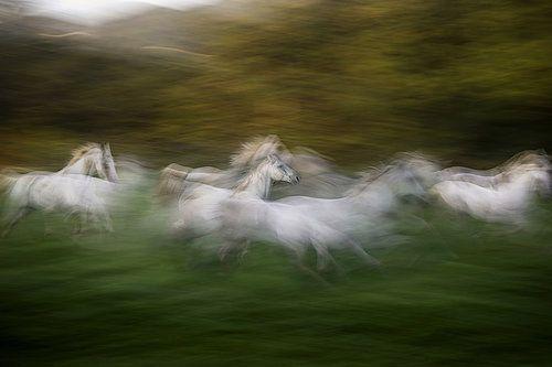 Gallop across the field by milan malovrh