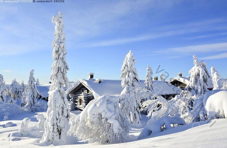 Lomamökit tunturimaisemassa - mökki mökkikylä hirsimökki kelomökki lomakylä lomamökit  luminen talvinen huurteinen maisema tykkylumi koskematon hanki talvi kylmä pakkanen sininen taivas Iso-Syöte