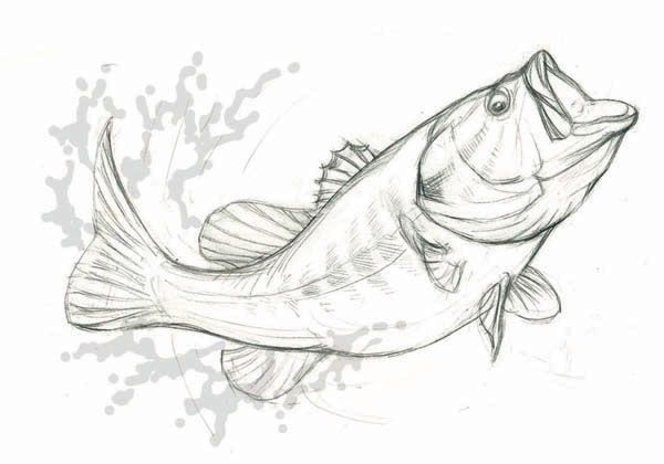 Want To Get A Vector Format Available As Eps At Shutterstock And Fish Sketch Fish Drawings Drawings