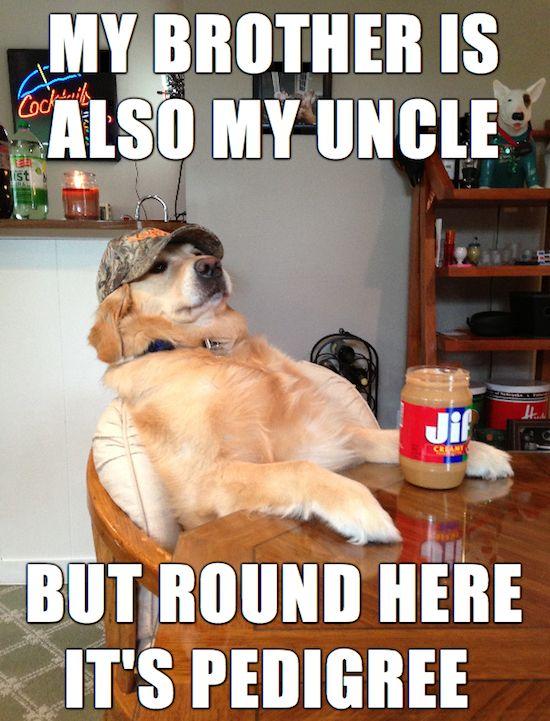 funny pictures, funny pics, funny vids, funny photos, funny memes, redneck retriever, redneck retriever meme, really funny memes, make meme, define meme, funniest meme, meme pictures