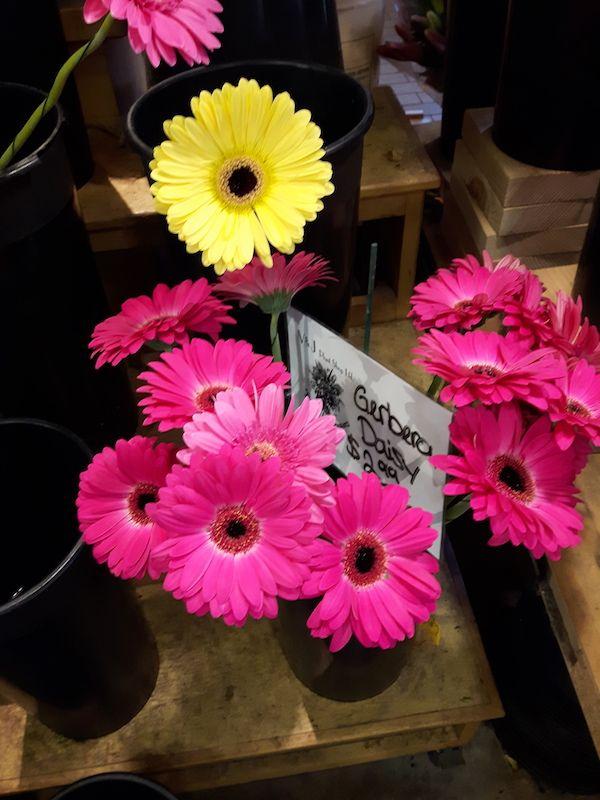 Love Gerbera daisies.