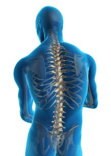 Back Pain in Bangalore, Neck Pain Treatment in Bangalore, FAQs to Our Chiropractors