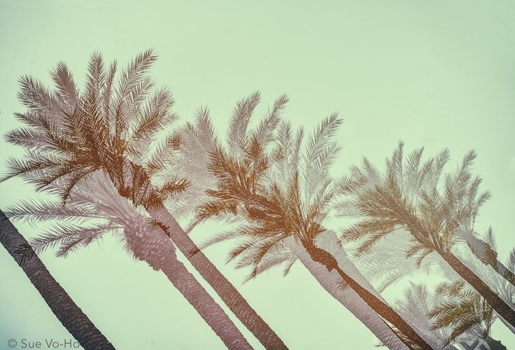Palmtrees by Sue Vo-Ho on 500px