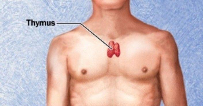 """Tudtat, hogy egy egyszerű technikával rögtön feloldhatod tested energiaáramlását? Az apró endokrin szerv, a csecsemőmirigy vagy tímusz neve a görög """"thymos"""" szóból ered, amely jelentése…"""