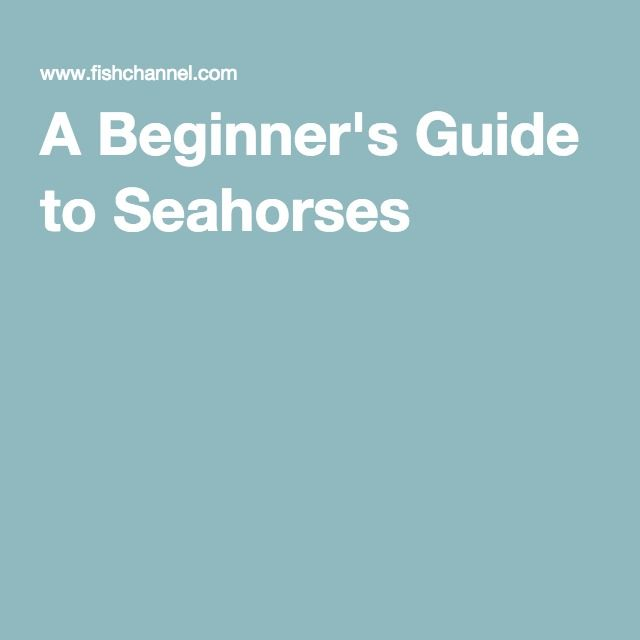 A Beginner's Guide to Seahorses