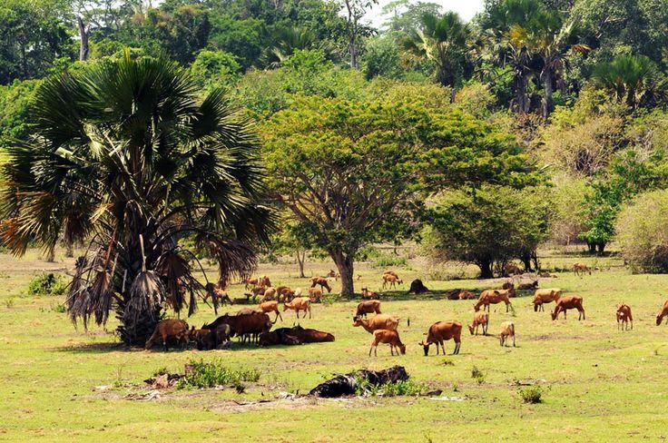 Alas Purwo National Park Banyuwangi, East Java
